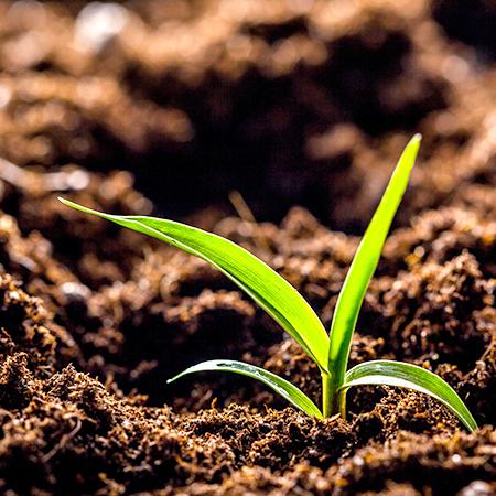 Soil/Seed Inoculants